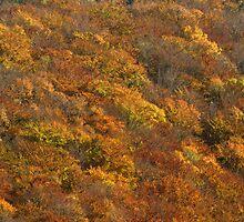 autumn colours by poupoune