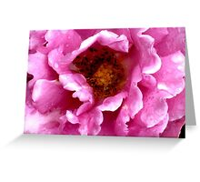 Pink Rose Greeting Card