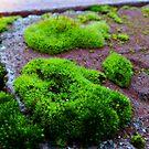 Moss On Bricks by WildestArt