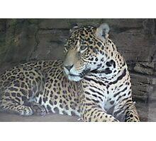 Jaguar.... Photographic Print