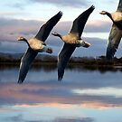 Geese flying over the Marine Lake by sandmartin