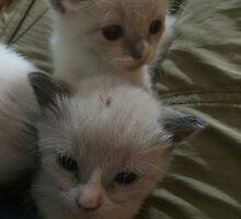Two Adorable Kittens by silverdragon