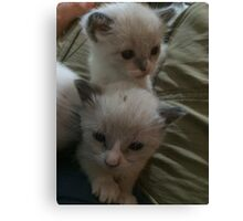 Two Adorable Kittens Canvas Print