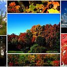 Connecticut Collage of Autumn by Debbie Robbins
