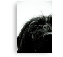 Sniff the Dog.... Canvas Print