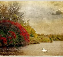 Swan Lake in Fall by Olga
