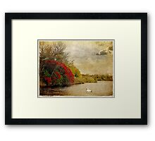 Swan Lake in Fall Framed Print