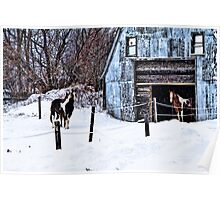Cold day at the Barn Poster