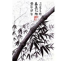 Bamboo haiku Photographic Print