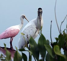 Wood Stork & Roseate Spoonbill by Gail Falcon