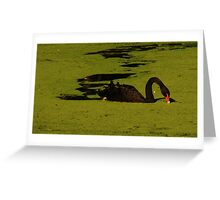 """Black Swan"" Greeting Card"
