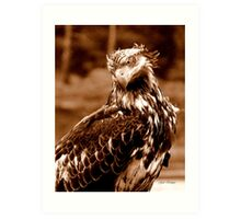Young Bald Eagle Art Print