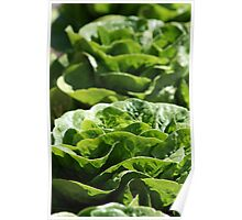 Decorative Lettuce Poster