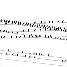 """Like a Bird on a Wire"" by SilverLilyMoon"