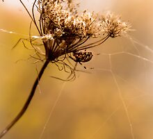 Golden Gossamer by Jeanne Sheridan