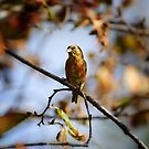 Crossbill in Fall by DJ LeMay