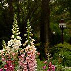 Foxgloves in Cottage Garden by Gabrielle  Lees