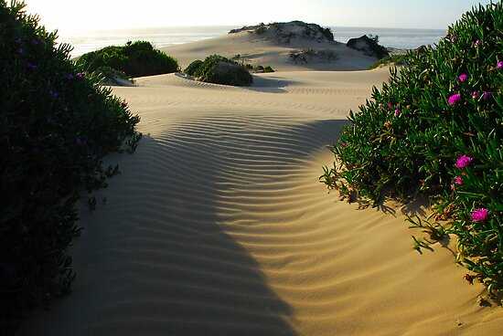 Tarkine Dunes  by Michael Walters