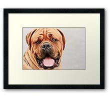 Mastiff Dog Portrait Framed Print