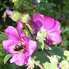 Hollyhock with visitor by Lorrie Davis