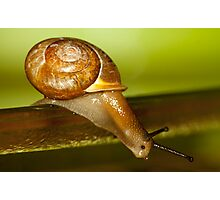 Snail Jump! Photographic Print