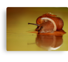 Snail peeping out! Canvas Print