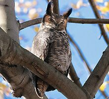 Great Horned Owl (Eminem, Guess who's Back) by Bradley Nichol