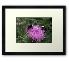 Thistle Bumble Bees Framed Print