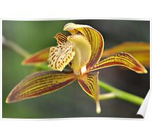 World of Orchids  Plate # 35 Poster