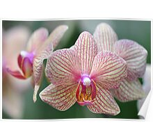 World of Orchids  Plate # 36 Poster