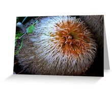 Banksia baueri Greeting Card