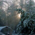 Winter Morning by Lorrie Davis