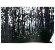 ballarat bushland Poster