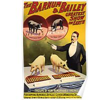 Poster 1890s Troupe of very remarkable trained pigs poster for Barnum & Bailey 1898 Poster