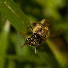 A Bee by liza1880