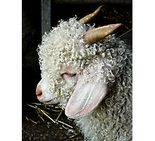 Profile of an Angora Goat  Photographic Print
