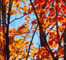 Vermont Red Maples Sticker