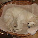 Sweet dreams Ditte! by Trine