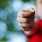 Daisy for mummy by Lee-Anne Wilson