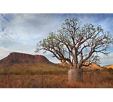 Boab Tree, Gibb River Road, Western Australia, 10 Oct 2010 Photographic Print
