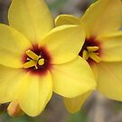 mellow yellow by Floralynne