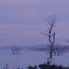 Arthurs Lake   Tasmania by SimplyRed