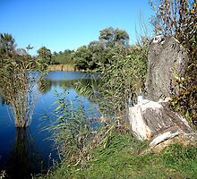 Town Fot.lake with tree stump_Hungary/Europe.2010.October by ambrusz