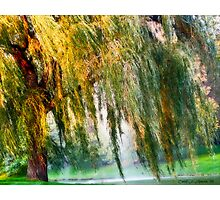 Weeping Willow Tree Daydreams Photographic Print