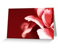 Pink Flower on a Red Background Greeting Card