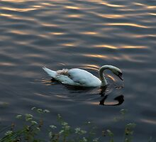 Swan Lake by diggle