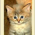 MISS YOU ! - KITTEN CARD by Magriet Meintjes