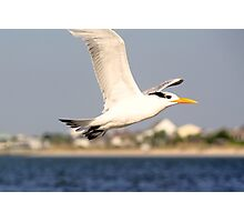 Soaring above the Waves Photographic Print