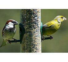 Finches on the birdfeeder Photographic Print