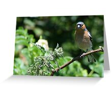Finch in the trees Greeting Card